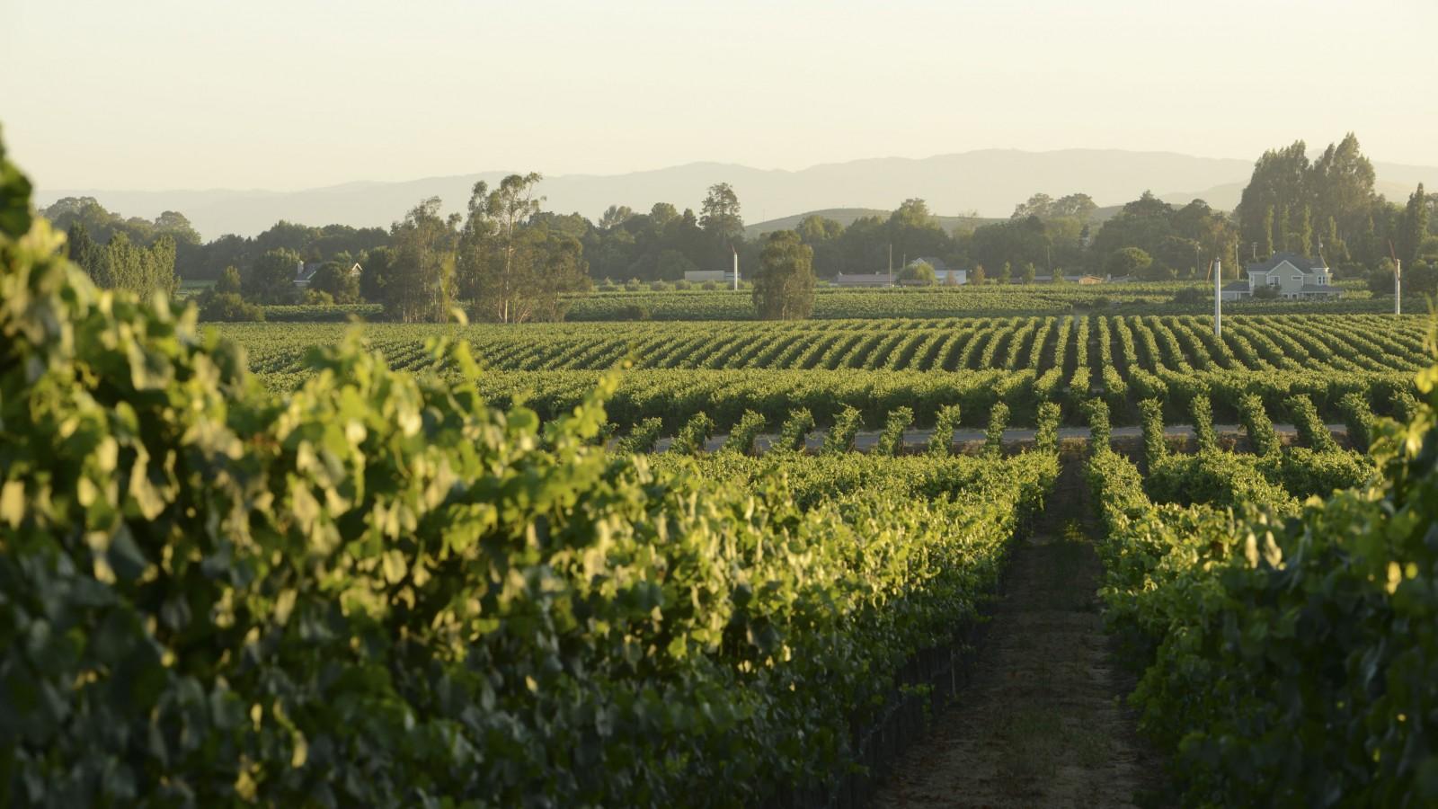 Starmont Vineyards